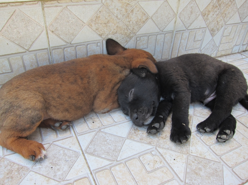 Once they were pups