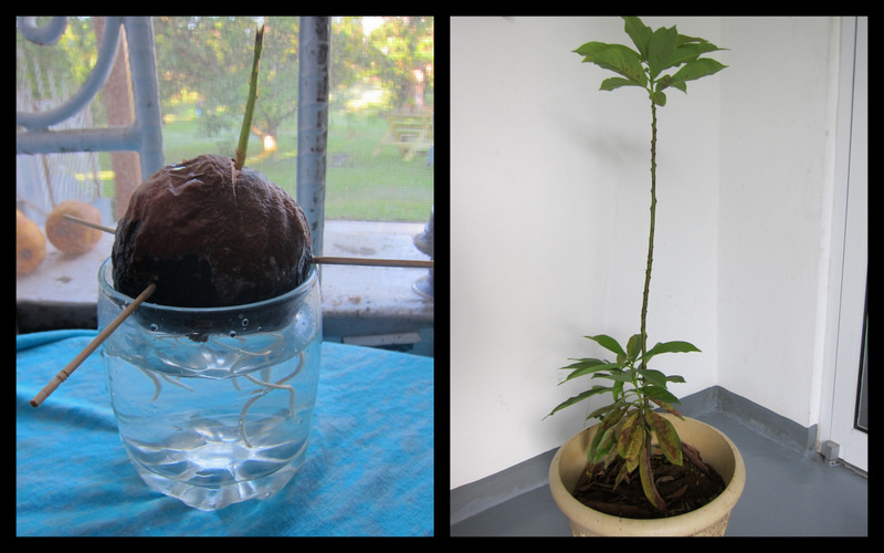 lucky #3 from seed to tree
