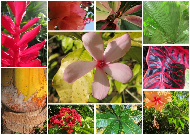 jamaica flowers