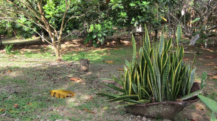 jamaica yardscape