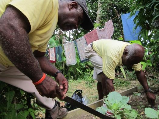 The Ace staff prepare plant vegetables