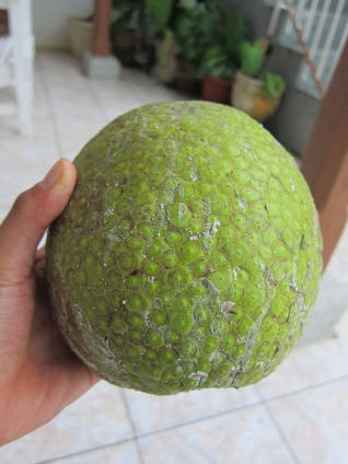 breadfruit jamaica