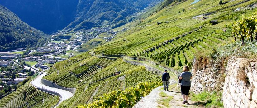 Martigny-Switzerland-hiking-vineyards