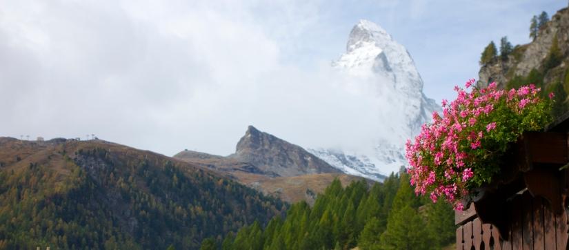 matterhorn-zermatt-switzerland-flowers